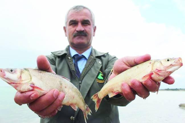 Beyşehir'in yağ, sıraz ve sudak balıkları tescillendi