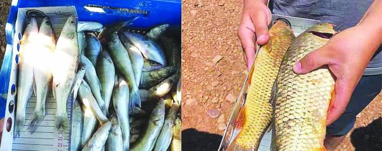 Boy limiti altı balık avına ceza