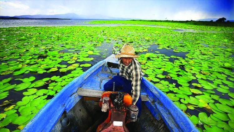 Göl'deki Nilüferler görsel şölen sunuyor