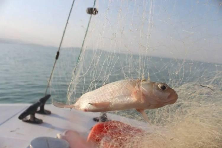 Beyşehir Gölü tükeniyor, balık nesli tehdit altında!.. İLGİLİ VE YETKİLİLERİ UYARIYORUZ